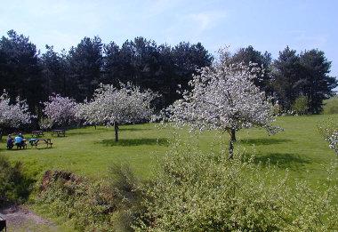 ashtree-farm-kent