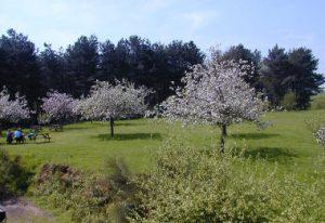 Ashtree Farm View